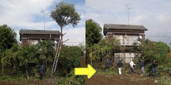 庭木 樹木 処分